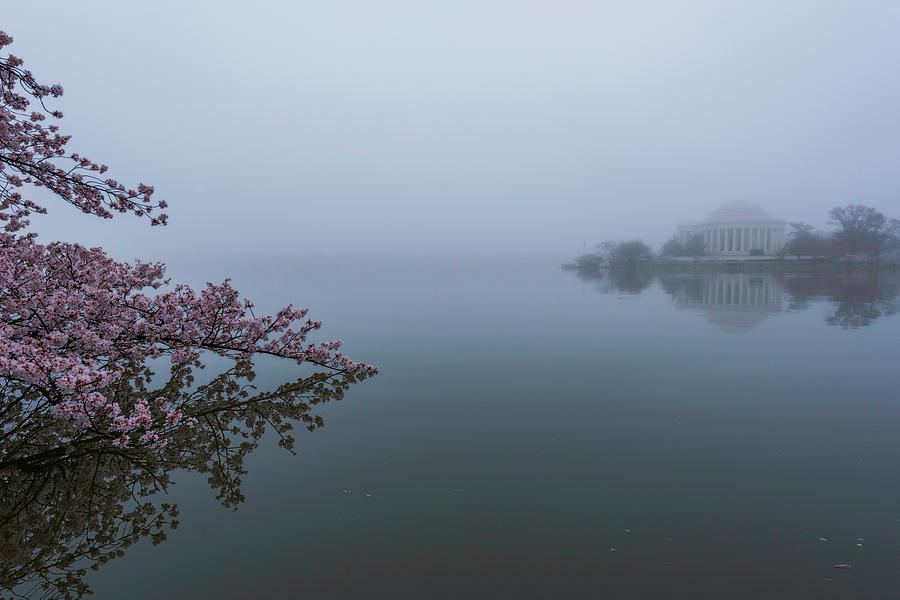 Alexandria Photograph - Morning Fog At The Tidal Basin by Michael Donahue