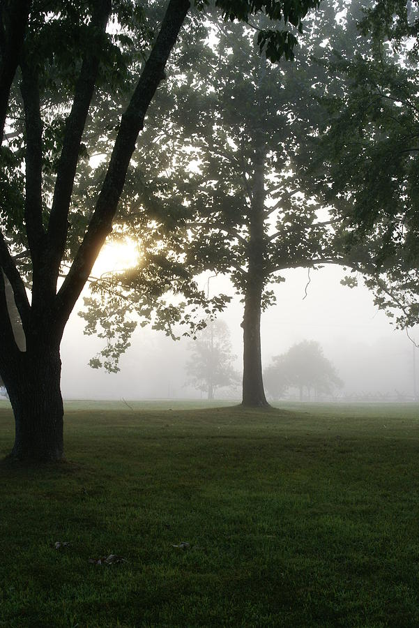 Nature Photograph - Morning Fog by Heidi Poulin