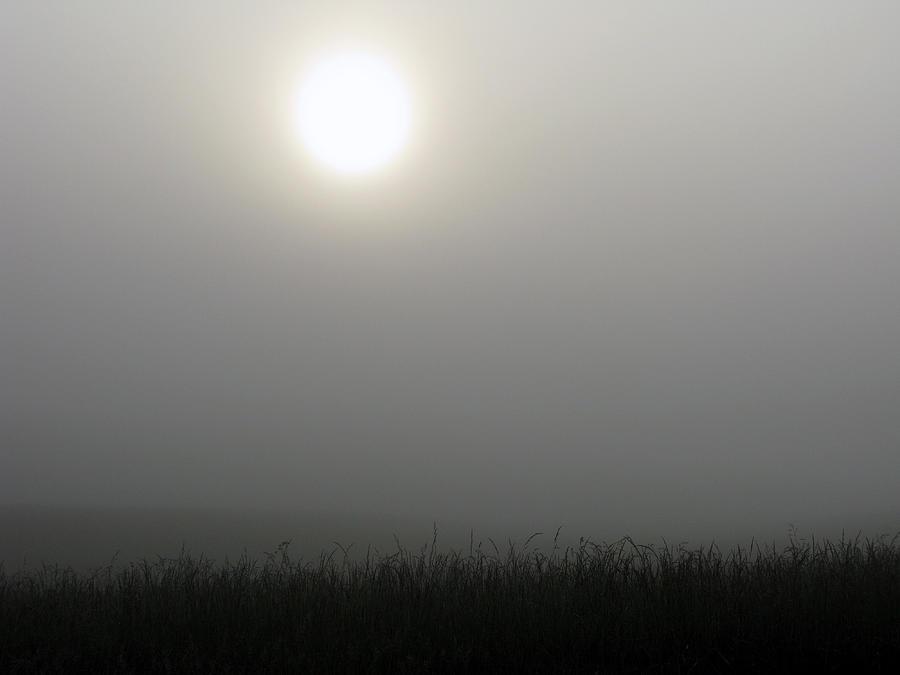 Fog Photograph - Morning Fog by Martie DAndrea