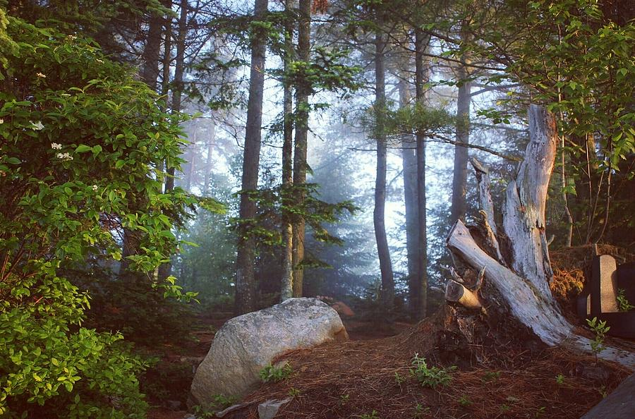 Forest Photograph - Morning Forest Light by Jessica Tabora