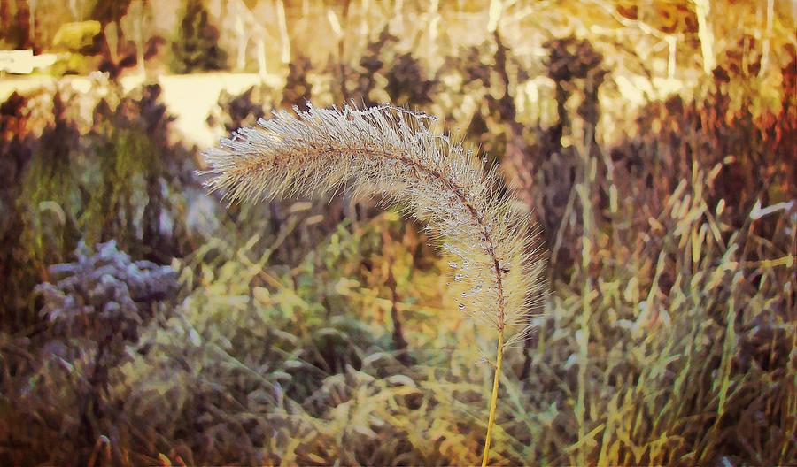 Winter Photograph - Morning Frost by JAMART Photography