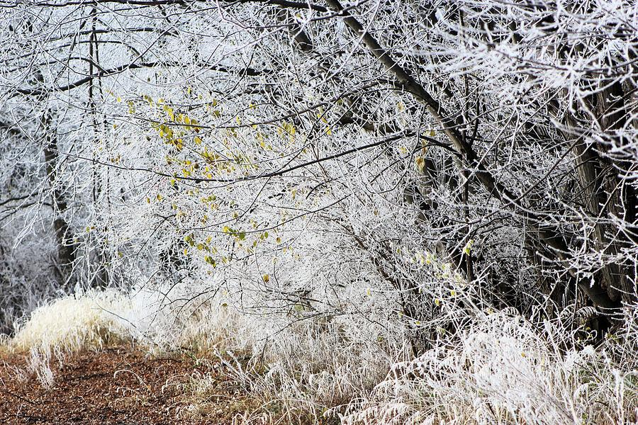 Morning Frosty Walk Photograph
