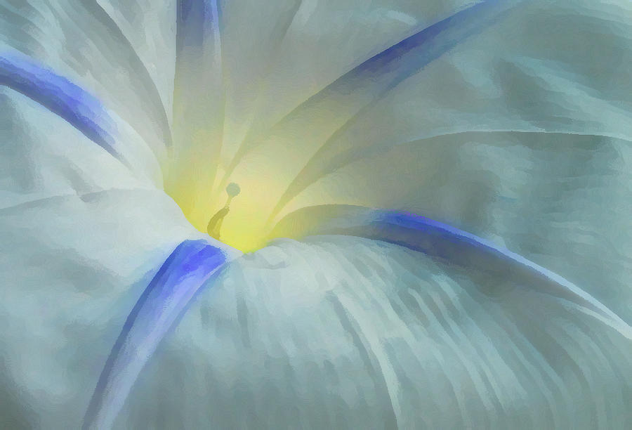 Morning Glory Photograph - Morning Glory by Gene Sizemore