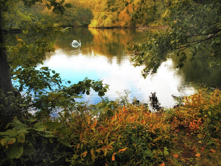 Autumn Photograph - Morning Glory by Jessica Jenney