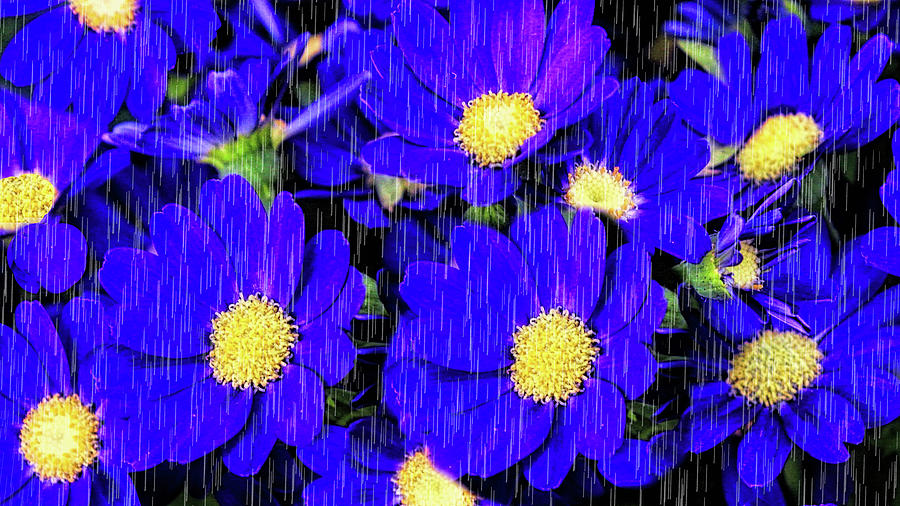 Landscape Photograph - Morning Glory Rain by Pat Cook