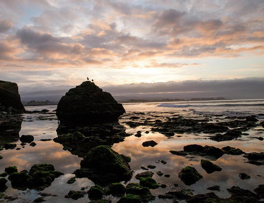 Morning Gulls by Lora Lee Chapman