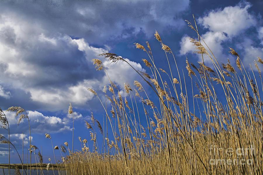 Atmosphere Photograph - Morning In May by Wedigo Ferchland
