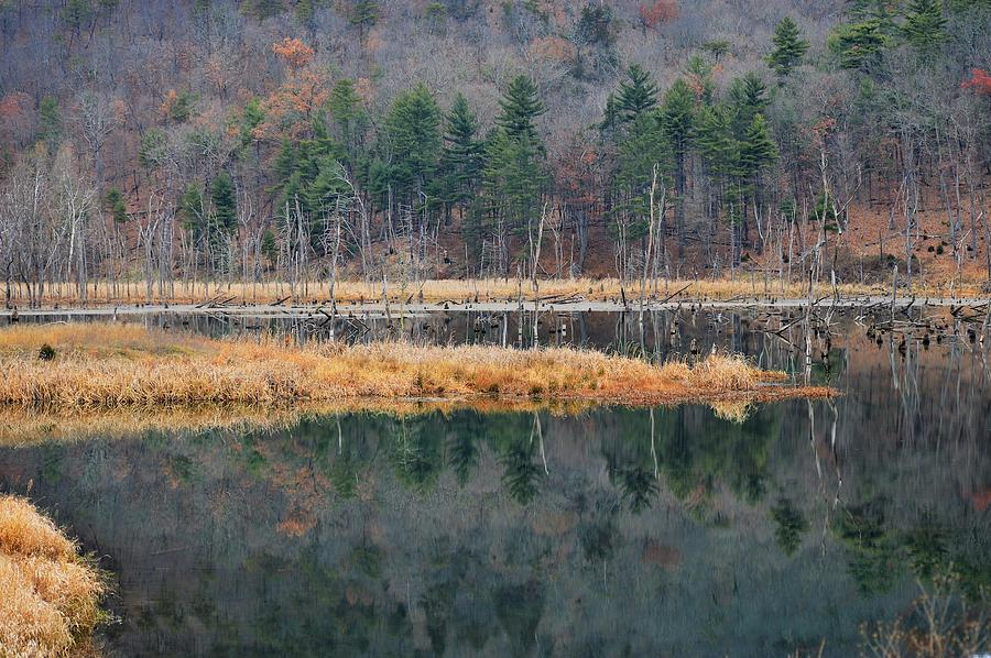Lake Photograph - Morning In The Mirror by Jewels Hamrick