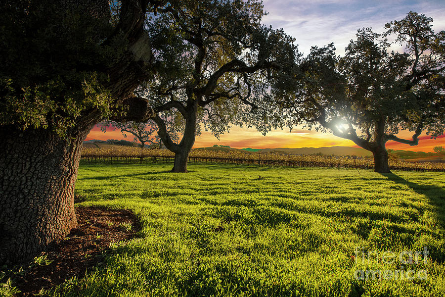 Napa Photograph - Morning In Wine Country by Jon Neidert
