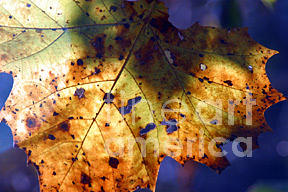 Nature Photograph - Morning Light by Janice Keener