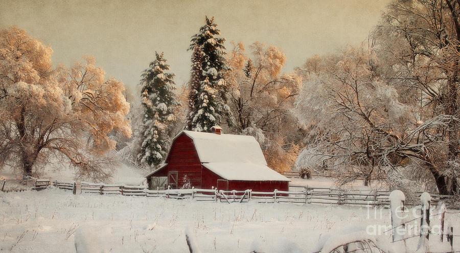 Barnyard Photograph - Morning Magic II by Beve Brown-Clark Photography