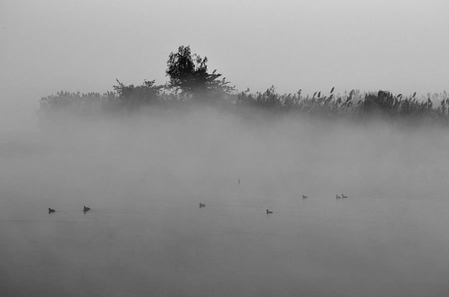 Mist Photograph - Morning Mist At Wetland Of Harike by Manjot Singh Sachdeva