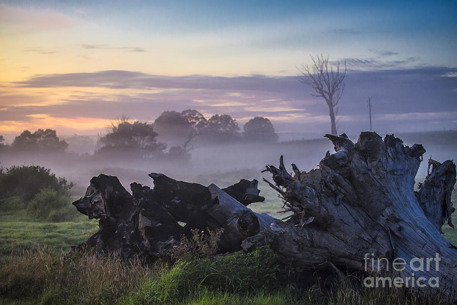 Morning Photograph - Morning Mist by Sheila Smart Fine Art Photography