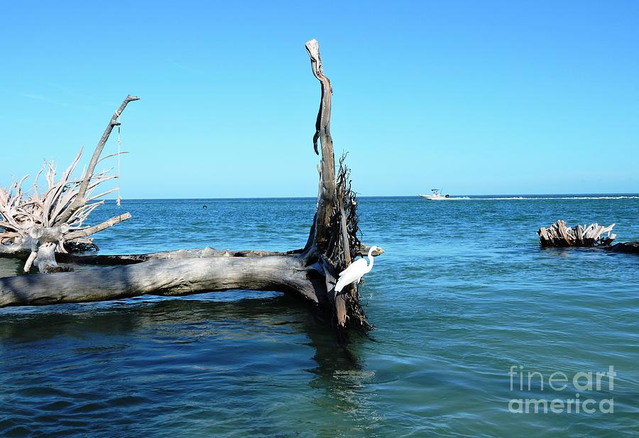 Blue Photograph - Morning On Longboat Key by Beth Williams