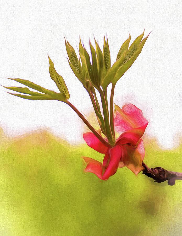 Flower Photograph - Morning Prayer by Paul Malen