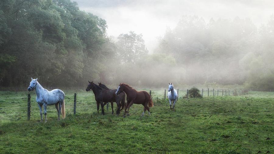 Horses Photograph - Morning Run by Frank Morales Jr