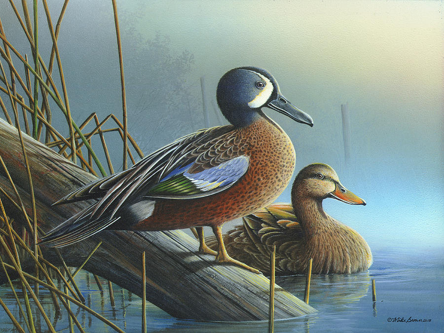 Blue-winged Teal Painting - Morning Sun by Mike Brown