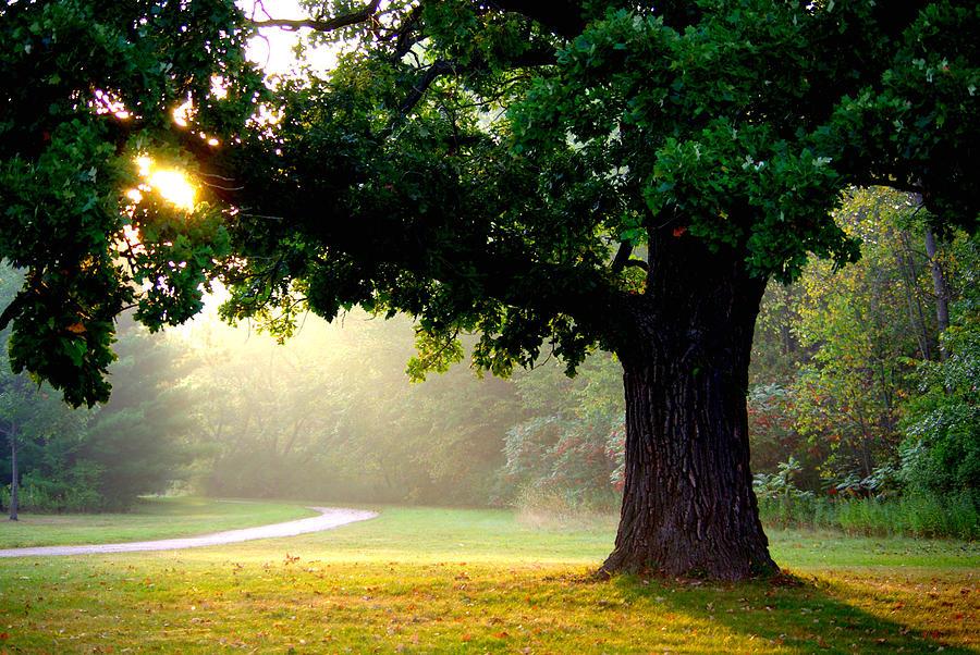 Morning sunrise photograph by linda mishler for Morning sunrise images
