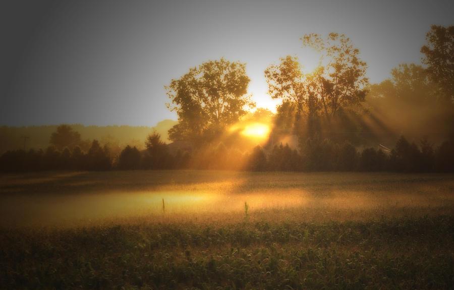 Sunrise Photograph - Morning Sunrise On The Cornfield by Cathy  Beharriell