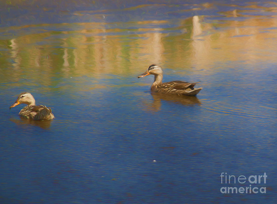 Wildlife Photograph - Morning Swim by Kathleen Rinker