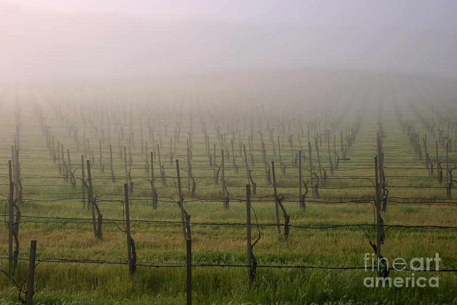 Landscape Photograph - Morning Vineyard by Balanced Art