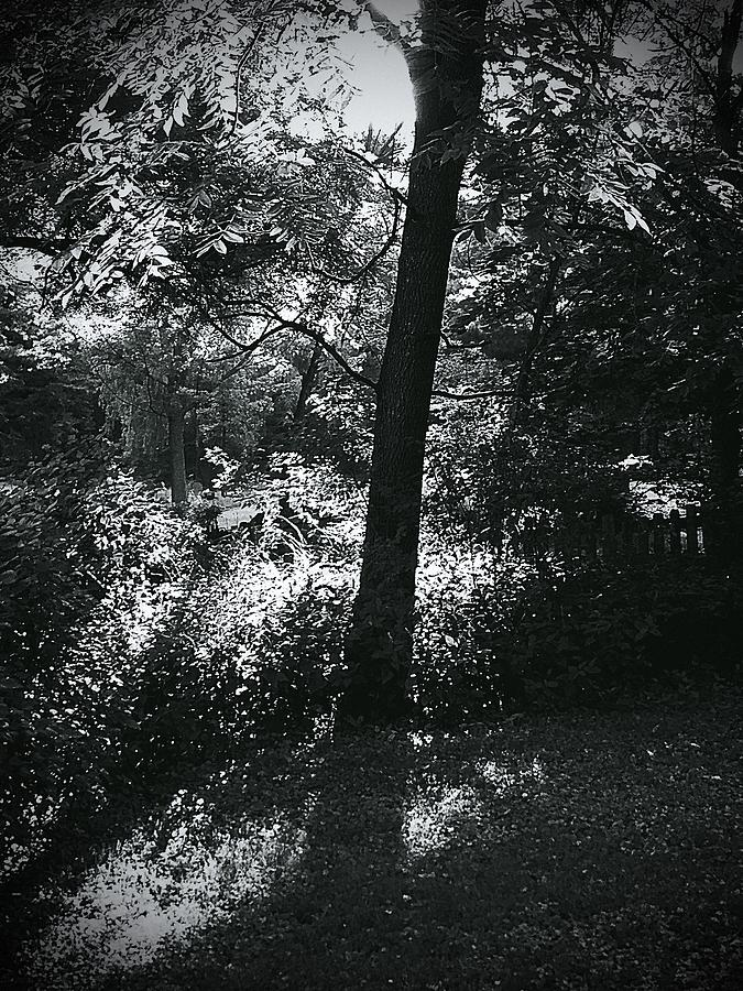 Black And White Photograph - Morning Warm Up  by Frank J Casella