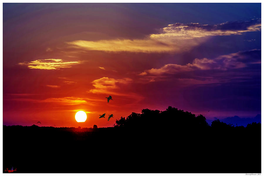 Florida Photograph - Morning Silhouette by Rogermike Wilson