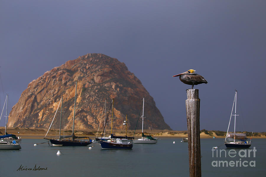 MORRO ROCK GUARDIAN by Alison Salome