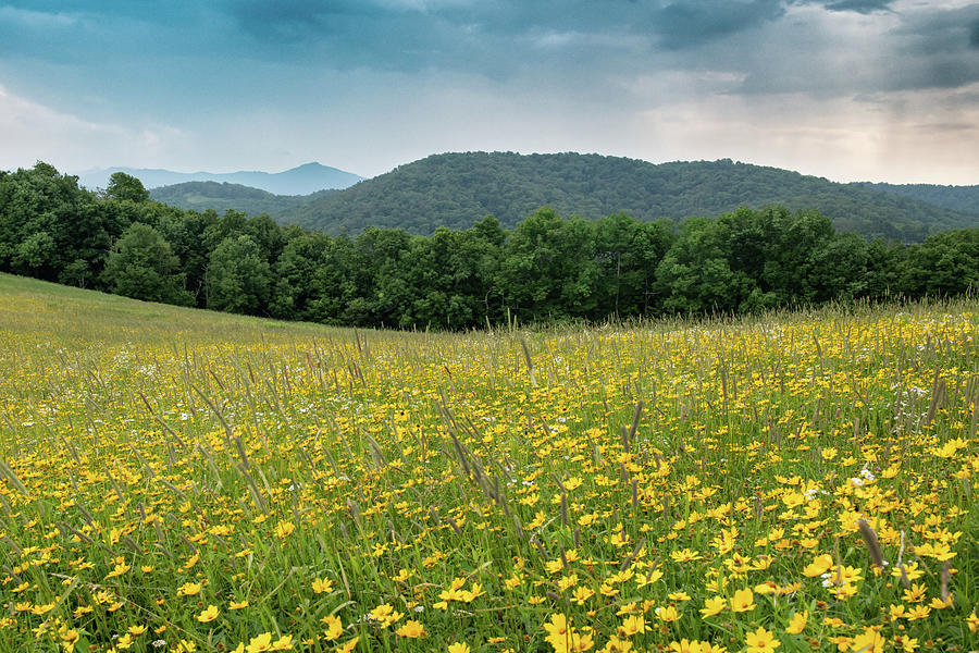 Blue Ridge Mountains Photograph - Moses Cone Meadow by Jim Neal