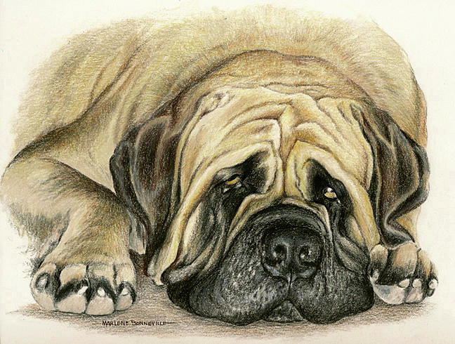 Dogs Drawing - Moses by Marlene Bonneville