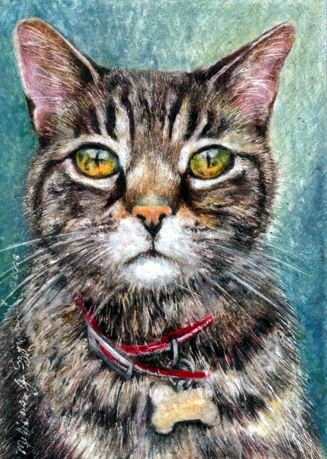 Cat Drawing - Moses by Melissa J Szymanski