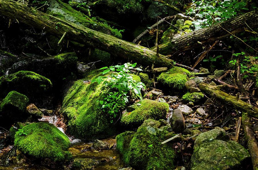 Moss At Wigwam Falls Photograph