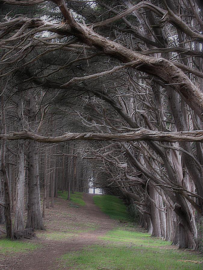Landscape Photograph - Moss Beach Trees 4191 by Karen  W Meyer