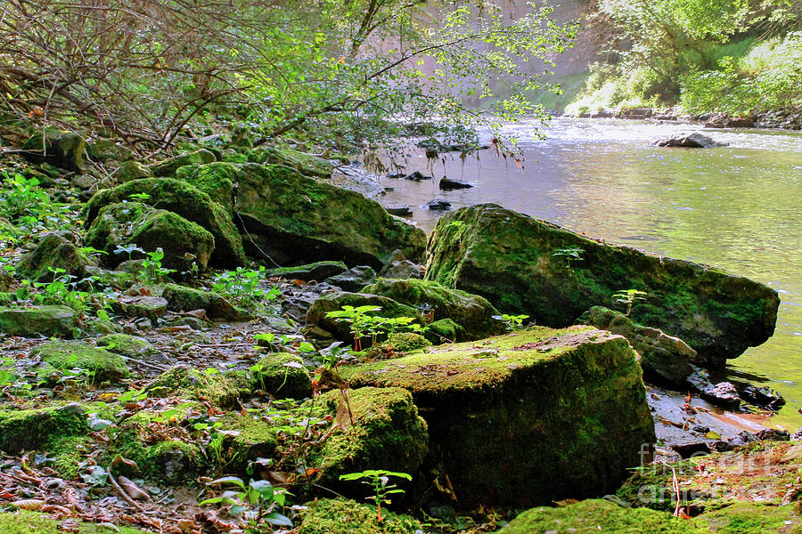 Moss Covered Boulders Photograph by Lowell Stevens