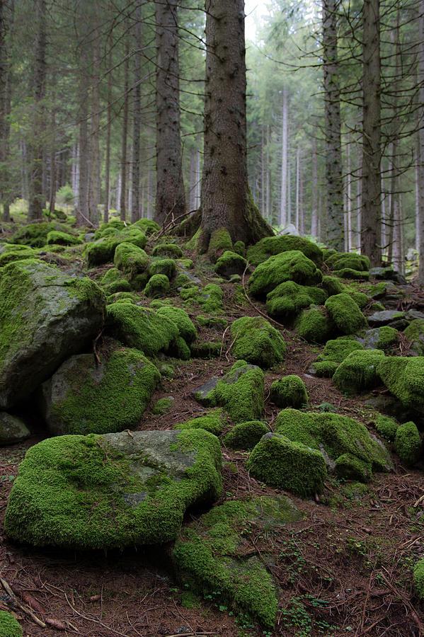 Moss Photograph - Moss covered rocks by Wim Slootweg