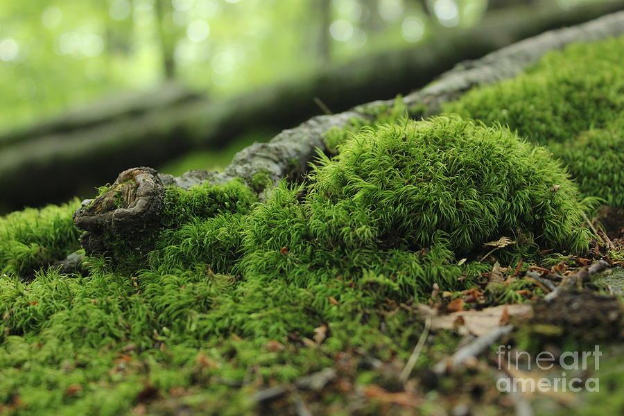 Moss by E B Schmidt