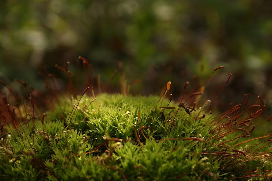 Moss Photograph - Moss by Erin  Svendsen