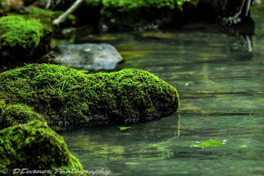Moss In A Spring Photograph by Dillon Turner