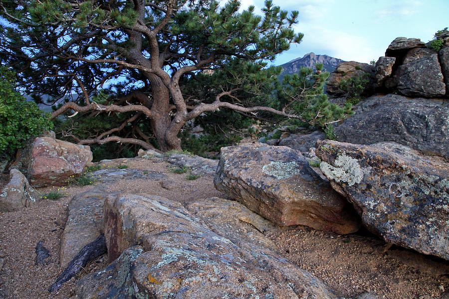 Moss Rocks And A Tree Photograph by James Steele