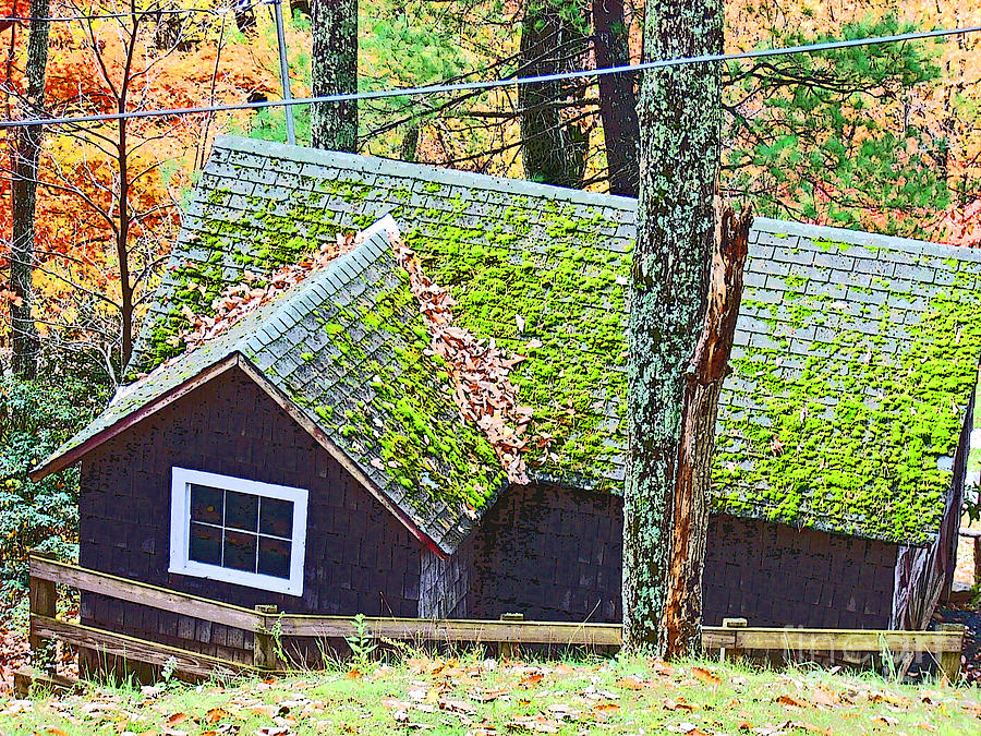 Cabin Photograph - Moss Roof by Beebe  Barksdale-Bruner