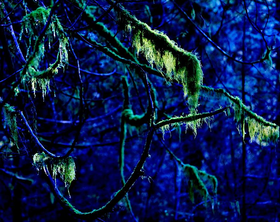 Mossy Forest 2 Photograph
