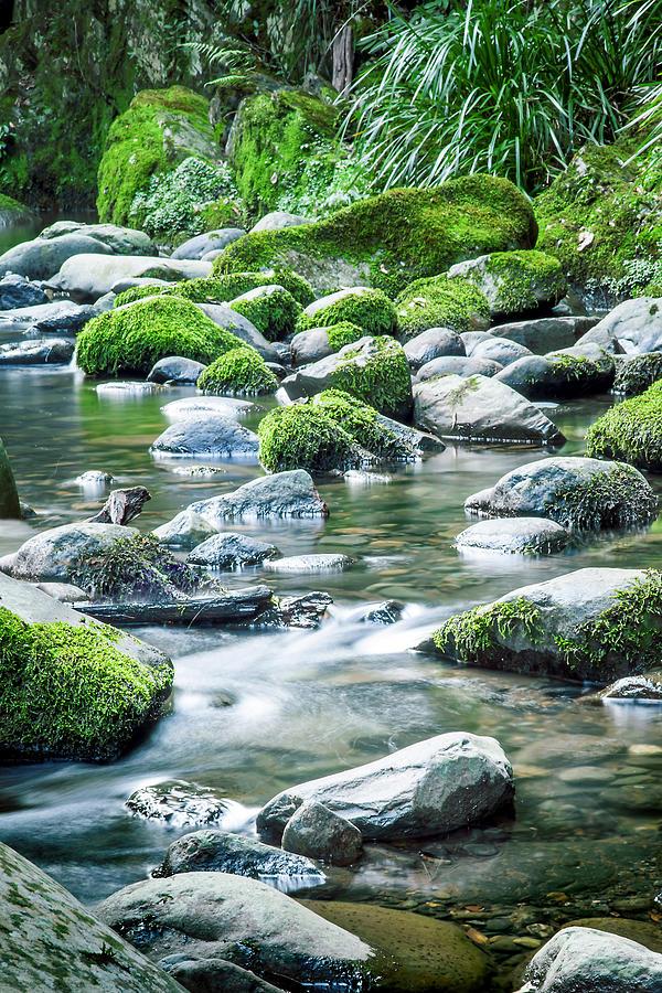 Stream Photograph - Mossy Forest Stream by Az Jackson