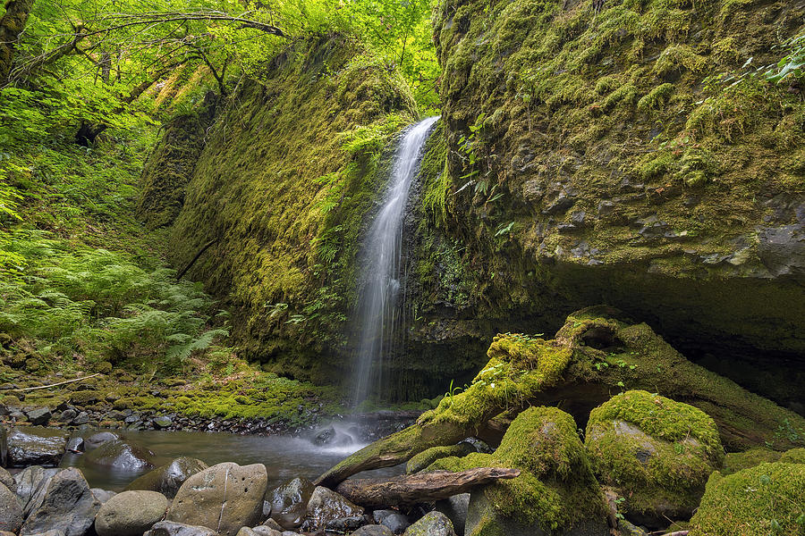 Ruckel Creek Photograph - Mossy Grotto Falls In Summer by David Gn