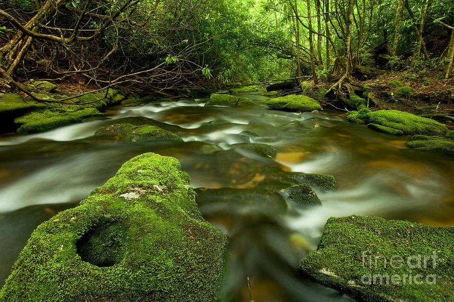 Forest Photograph - Mossy Rainforest Stream by Matt Tilghman