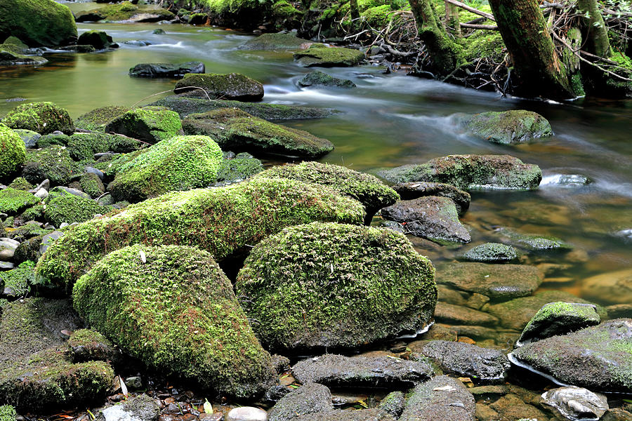 Mossy Photograph - Mossy Stream Bed by Nicholas Blackwell