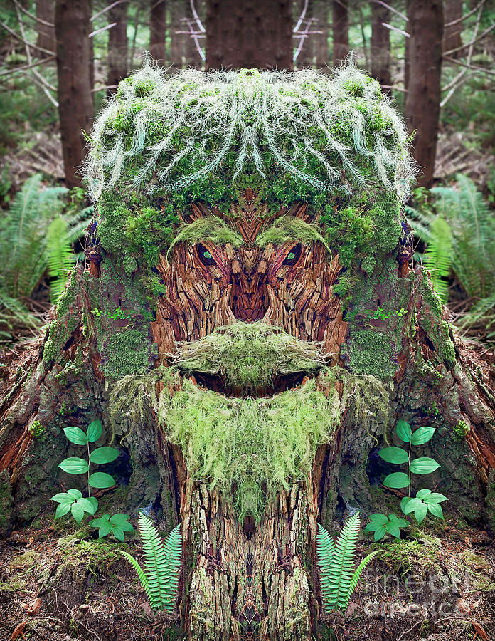 Moss Photograph - Mossman Tree Stump by Martin Konopacki