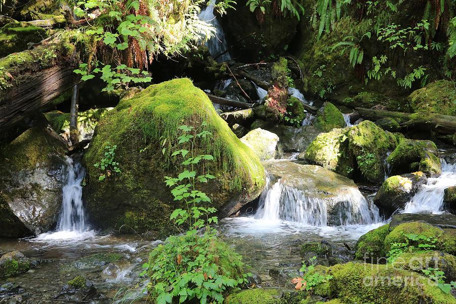 Mossy Waterfall by Carol Groenen