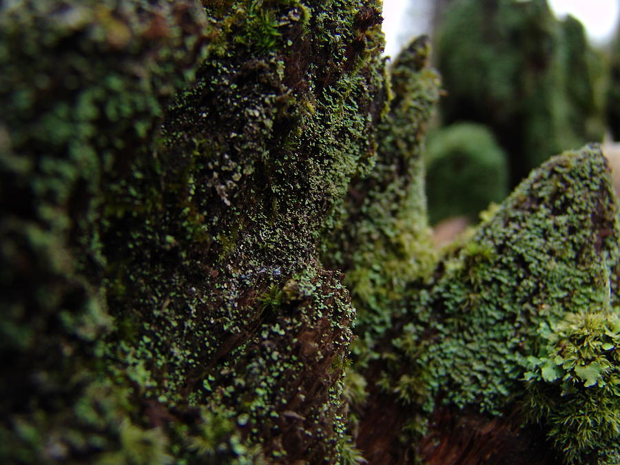 Mossy Photograph - Mossy Wood 008 by Ryan Vaal