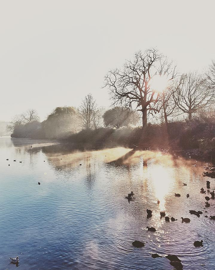 Landscape Photograph - Mote Park Winter Morning  by Stuart Ellesmere