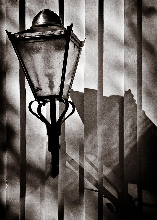 Moth Photograph - Moth And Lamp by Dave Bowman